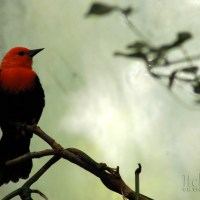 Travel Photo of the Week: Red-headed Step Bird