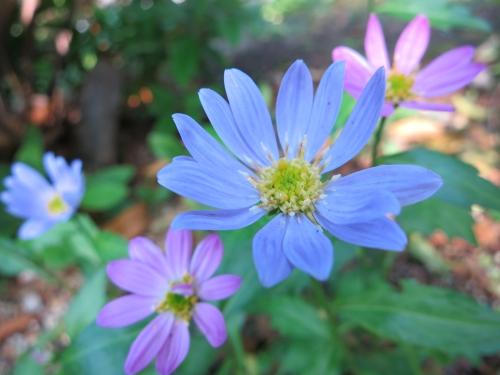 130502flower1