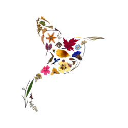Pressed Flowers - Hummingbird