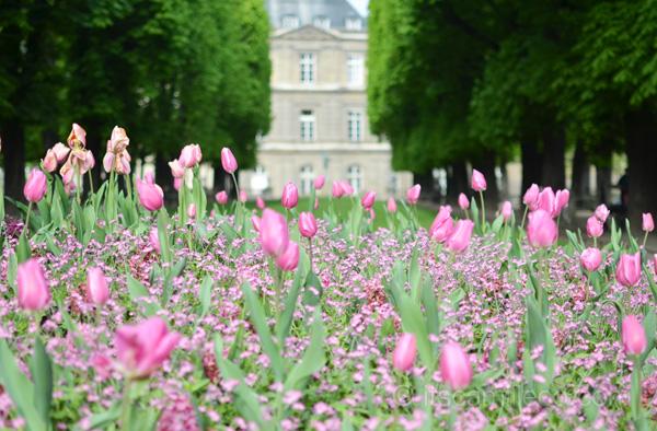 Jardin Du Luxembourg (18)