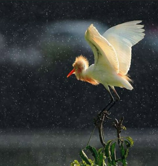 world-most-beautiful-rainy-season-bird-photography-