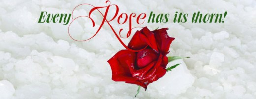 Red-Rose-with quote image 2013 2014