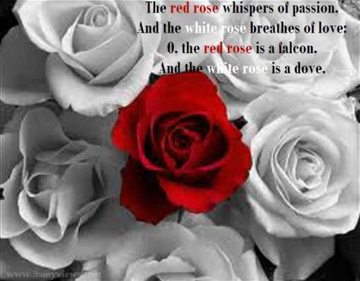 latest-romantic-rose-flower-wallpapers-with-love-quote-2013-2014