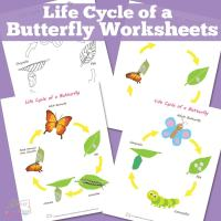 Life Cycle of a Butterfly Worksheet - Itsy Bitsy Fun