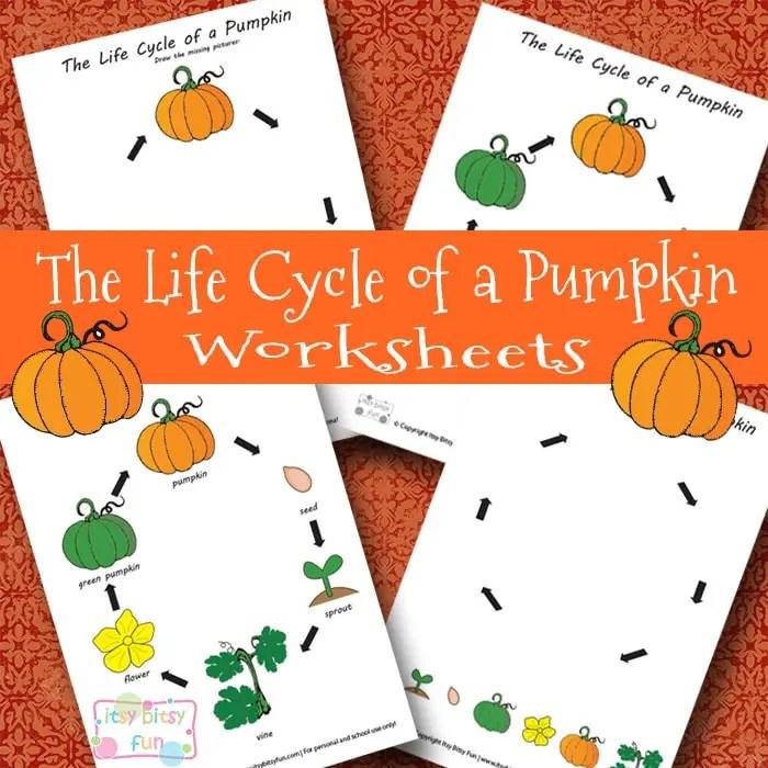 Life Cycle of a Pumpkin Worksheet - Itsy Bitsy Fun