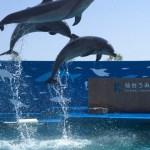 【観光】仙台うみの杜水族館の見どころと3つの目玉プログラムを動画で楽しむ!