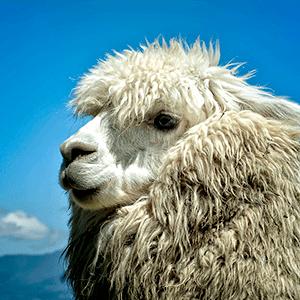 INT Llama