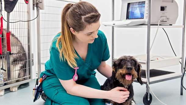 A Day in the Life of a Nurse SCVS Vet News - SCVS