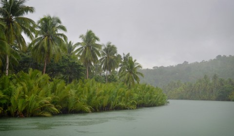 The river's shoreline is beautiful with the scattered palm trees and rich vegetation.