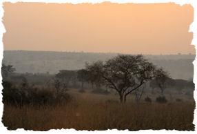 savannagebied