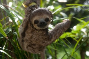 11 sloths that will make your day