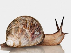Would you try a facial that used live snails?!