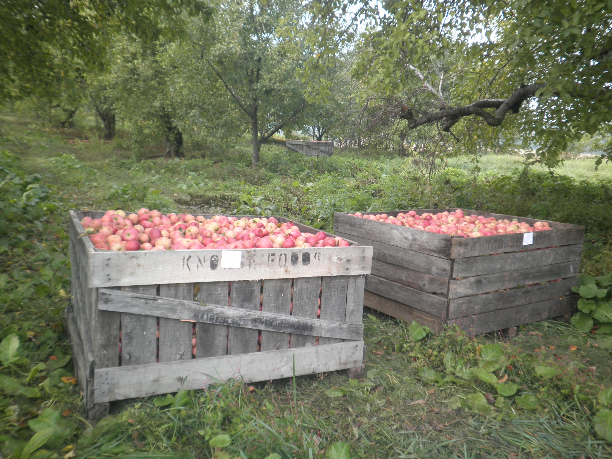 Fruit Bins For Sale Apple Cider Ivy Hill Farm