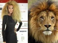 maya diab lion