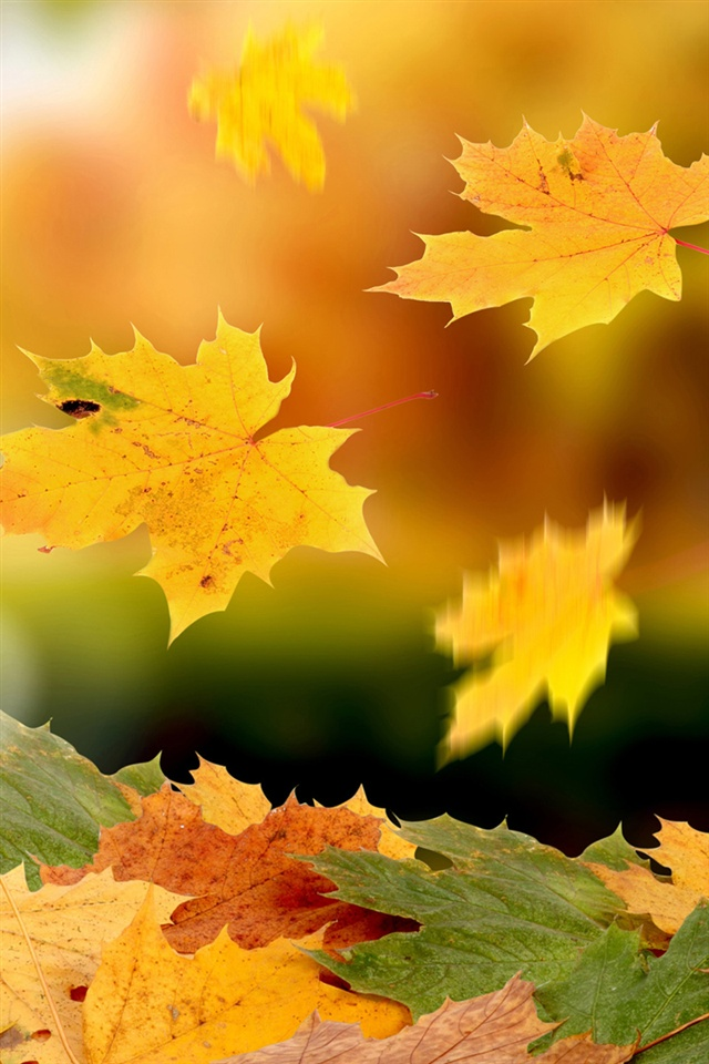 Fall Landscape Wallpaper Desktop Maple Leaves Falling In Autumn Iphone X 8 7 6 5 4 3gs