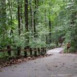 Bukit Timah Hill – Conquering Singapore's Tallest Peak