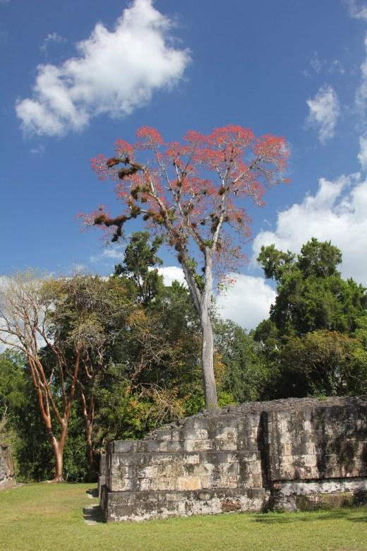 roots_of_the_maya_1080
