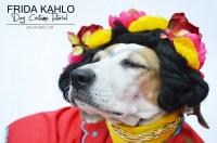 Frida Kahlo Dog Costume -DIY - Halloween Dog Costume