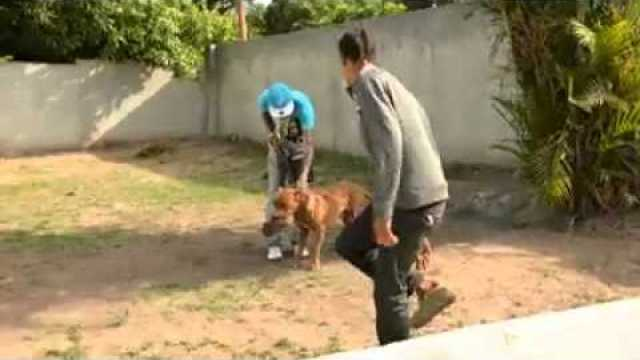Vybz Kartel Having Fun With His Dog 'Boxer'