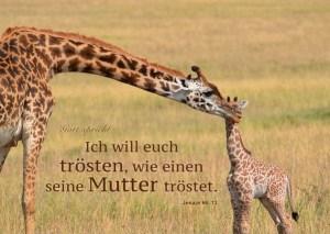 Jahreslosung 2016 Motiv Giraffe