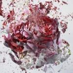 explosion-florale-martin_klimas6
