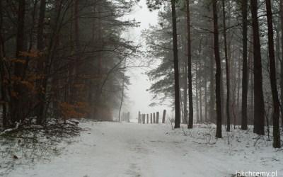 Winter holidays, tydzień drugi