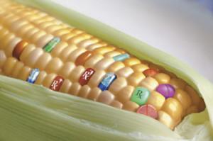 Russia Bans GMO Crops