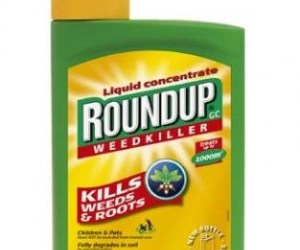 Roundup Causes Cancer