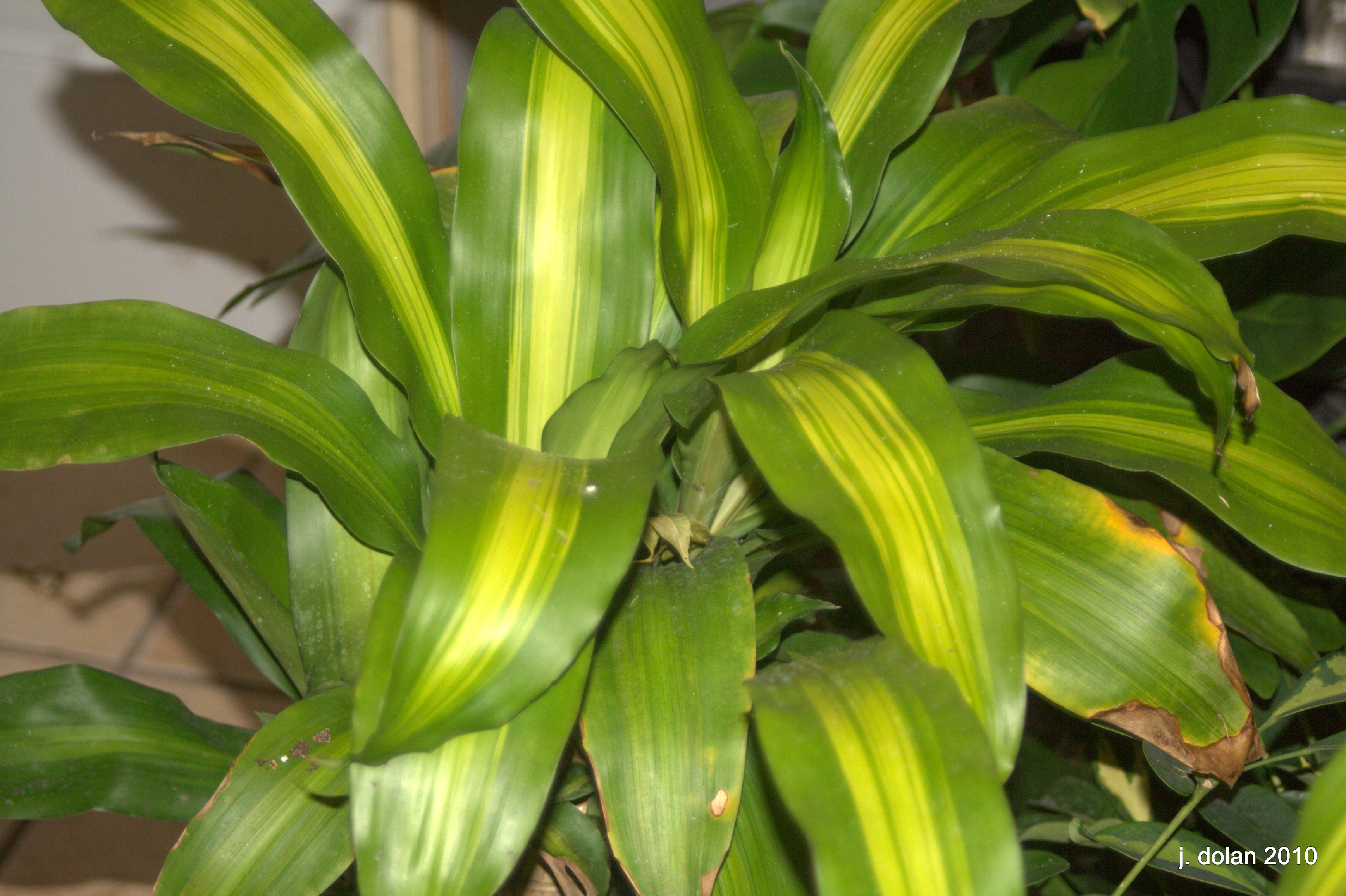 Tropical Foliage Indoor Plants Tropical House Plants Names