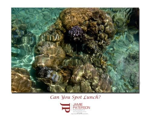crayfish australian seascape landscape