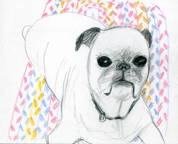emma-pug_blog