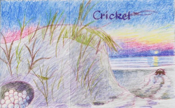 2-cricket-color72