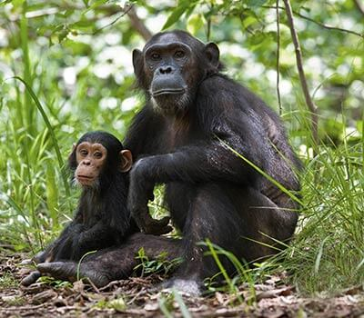 ProtectingApes_AP0304-19-