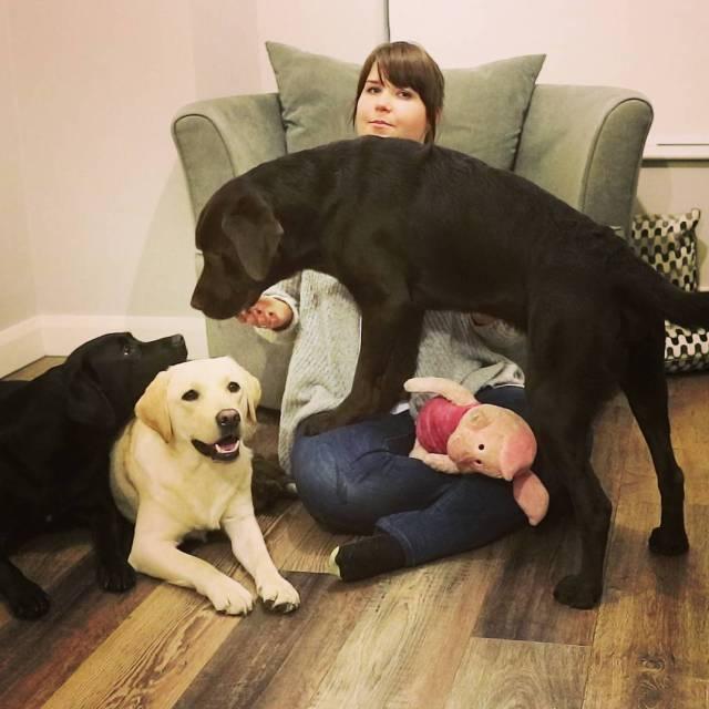 Widzielicie ju film na ktrym ujarzmiam trzy labradory?