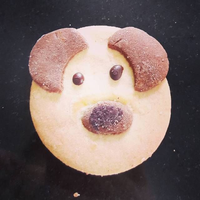 Moja ulubiona rasa psa Ciasteczkowy pies