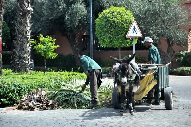 """Pracownicy """"zieleni miejskiej"""" porządkują nieogarnięte palmy."""