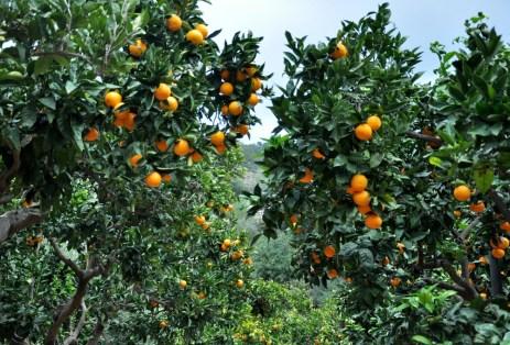 Na dole standardowo pomarańcze z drzewa ;)