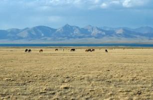 Właściwie, to to jest kwintesencja Kirgistanu: step, konie, jeziora, góry.