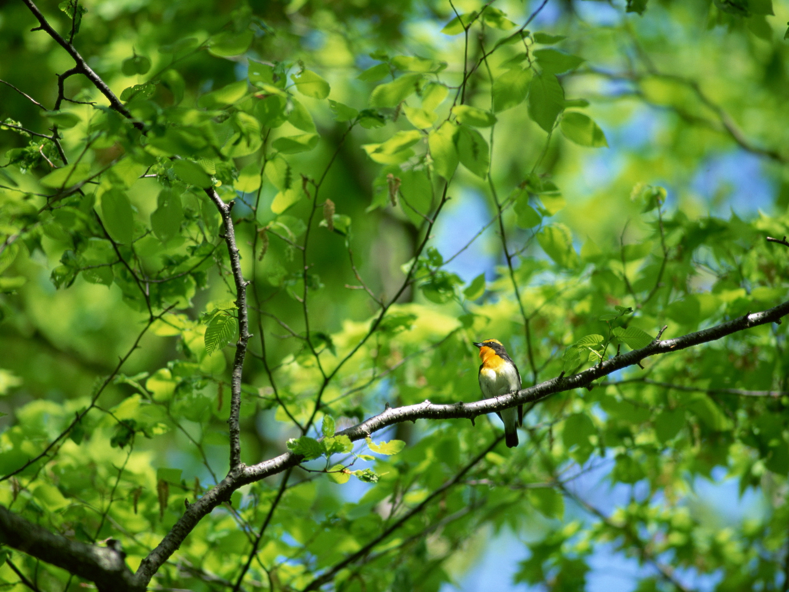 Fullsize Of Bird On A Branch