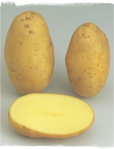 jyagaimo-alowa2