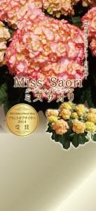 misu-saori7