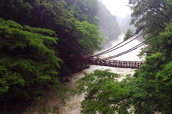 Iya Kazurabashi Bridge in the Iya Valley during the rainy season