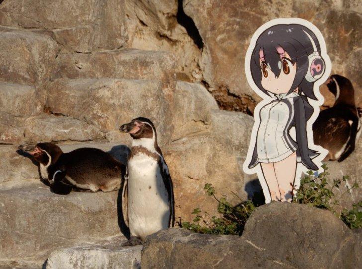 Anime Friends Wallpaper Humboldt Penguin Japari Library The Kemono Friends Wiki