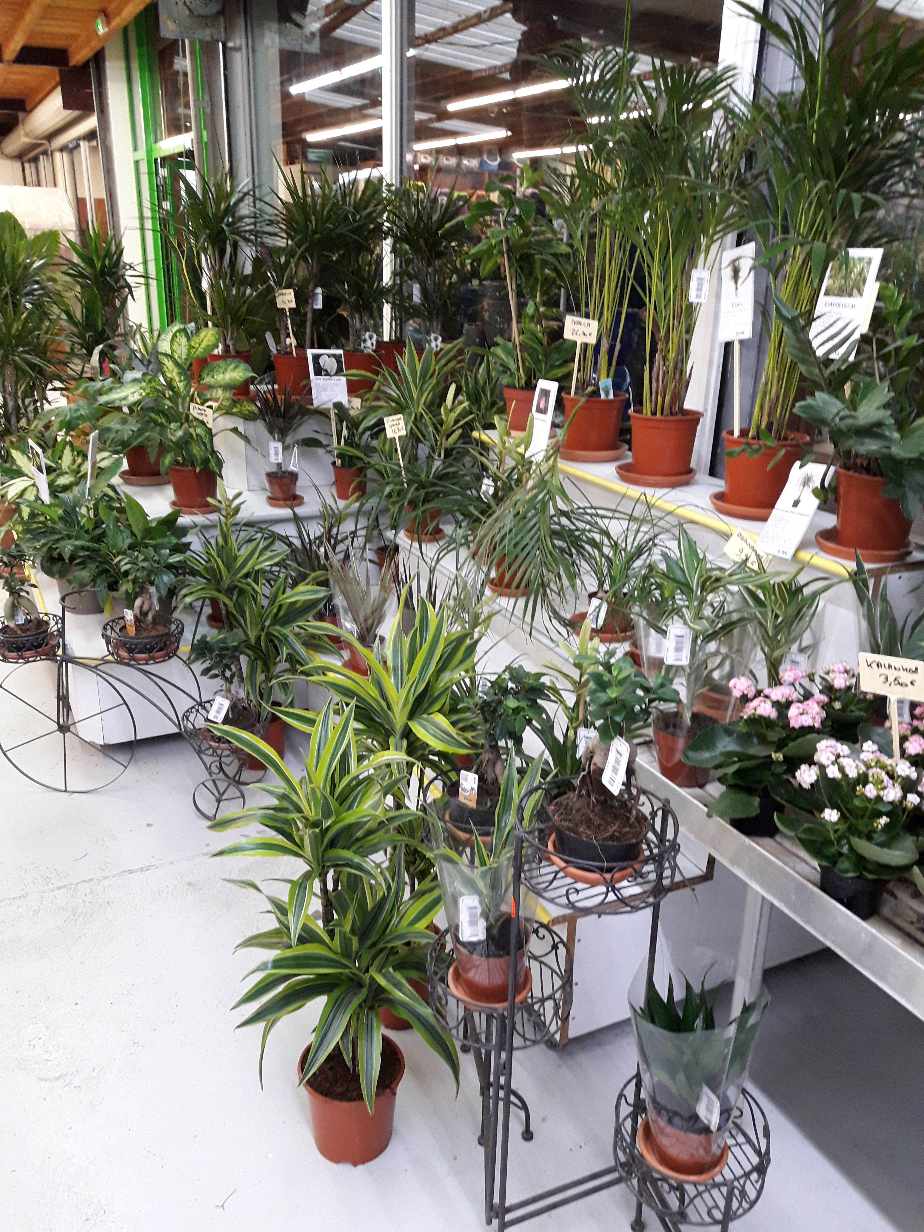 Plante Interieur Originale Plante Verte Intrieur Originale Excellent Plantes