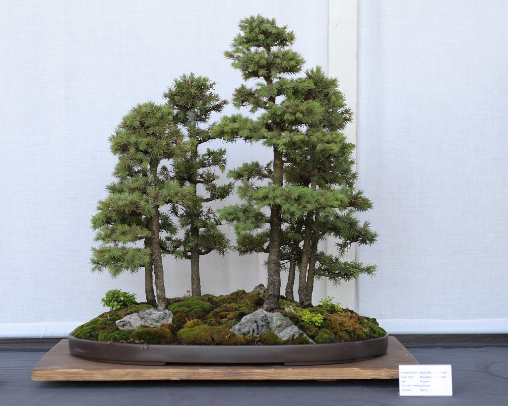 Bonsai D Interieur Especes Bonsai Interieur Espece Photo De Fleur Une Pensee Fleuriste