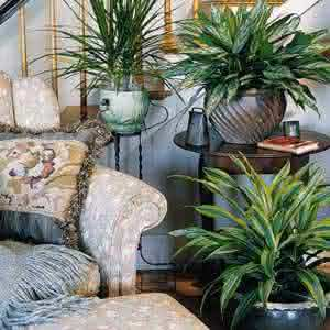 house indoor plants treatment tips1 As plantas e o interior