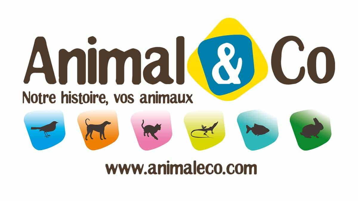 Animalerie Toulouse Occitanie Ouverture D Un Magasin Animal Co à Toulouse Une