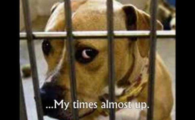aspca-or-poster Sarah Mclachlan Animal Cruelty Video