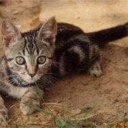 Target Kitten