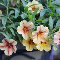 Jak dbać o kwiaty na balkonie?